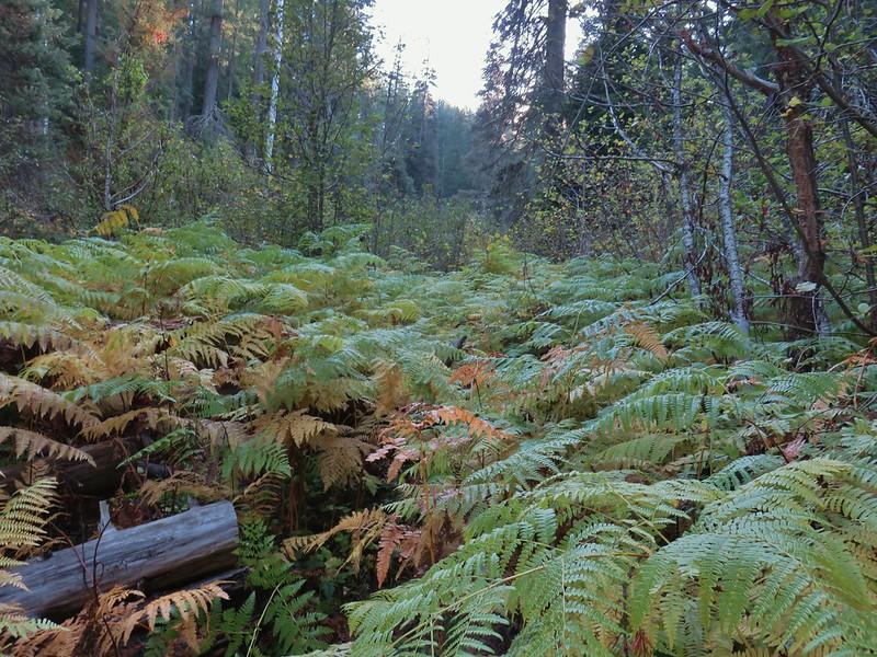 Union Creek Trail (it is straight ahead, really)