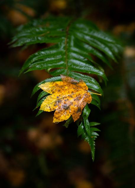 Catching Fall