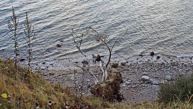 Brodtener Steilküste (Ostsee)