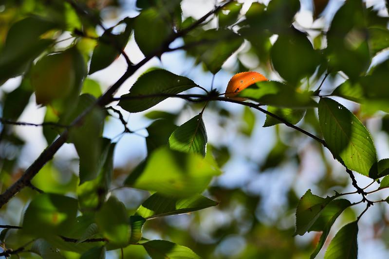 2020: Autumnal Feeling