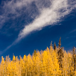2. Oktoober 2020 - 11:19 - Aspens in their peak fall colors in Colorado's Gore Range.