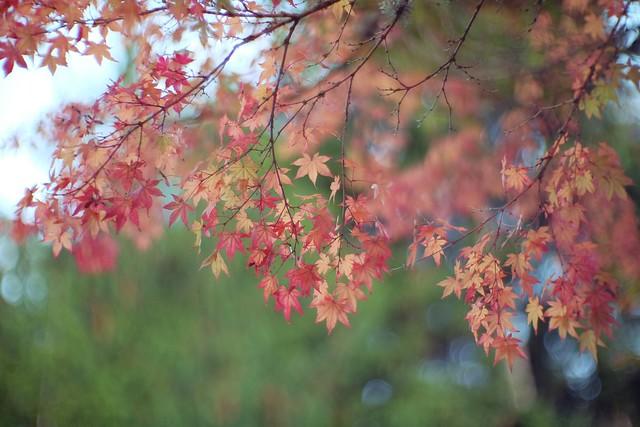 Bellevue Autumn Colors