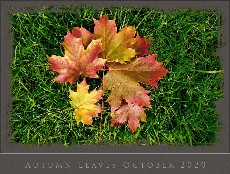 Autumn-Leaves-2020