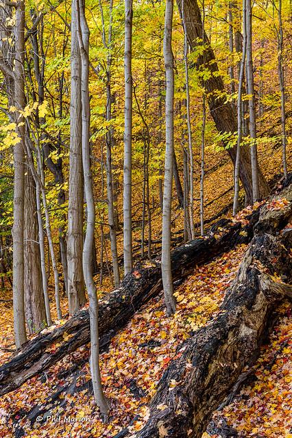Moccasin Trail Park