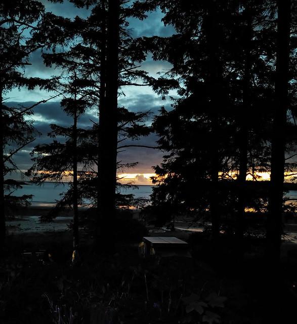 Blue Hour Through the Trees