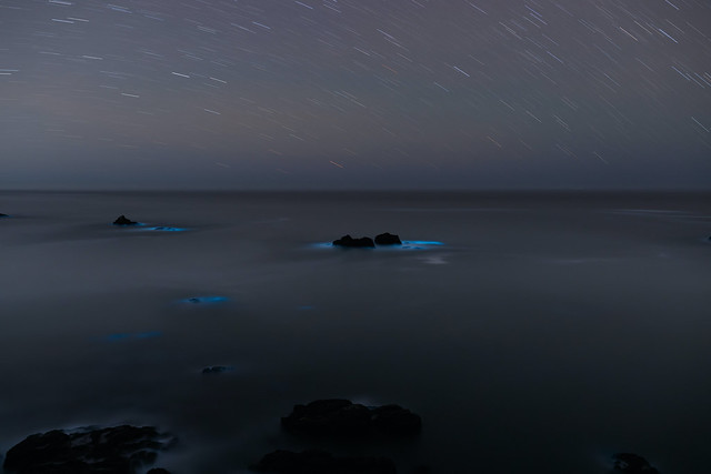 Bioluminescence at Duncan's Cove, Single Exposure