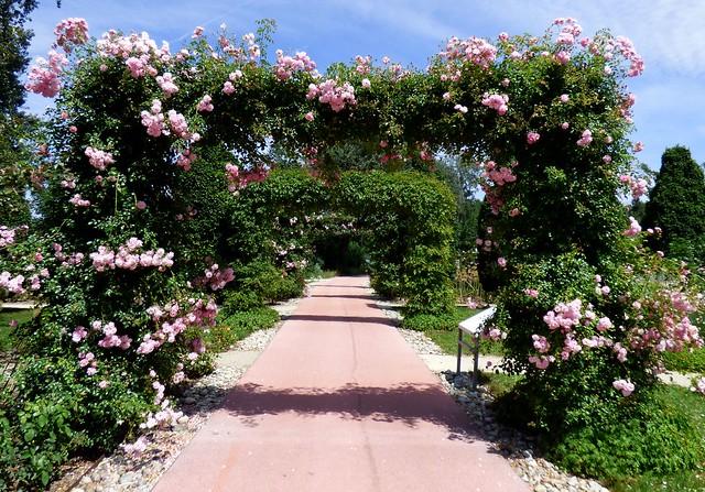 Rosenbögen / Rose arches