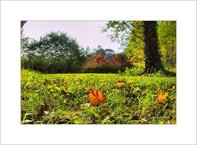 Teintes d'automne...