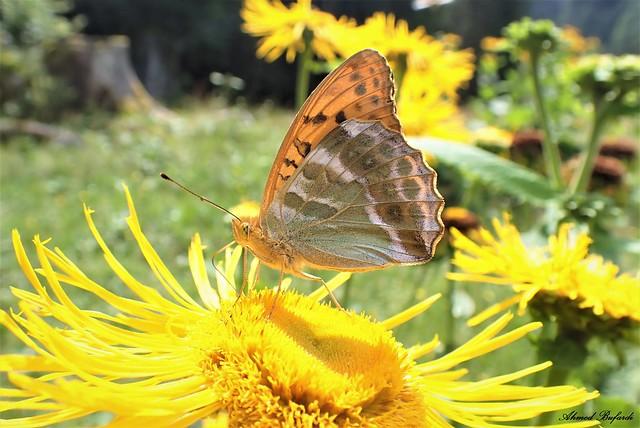 Butterfly 2092