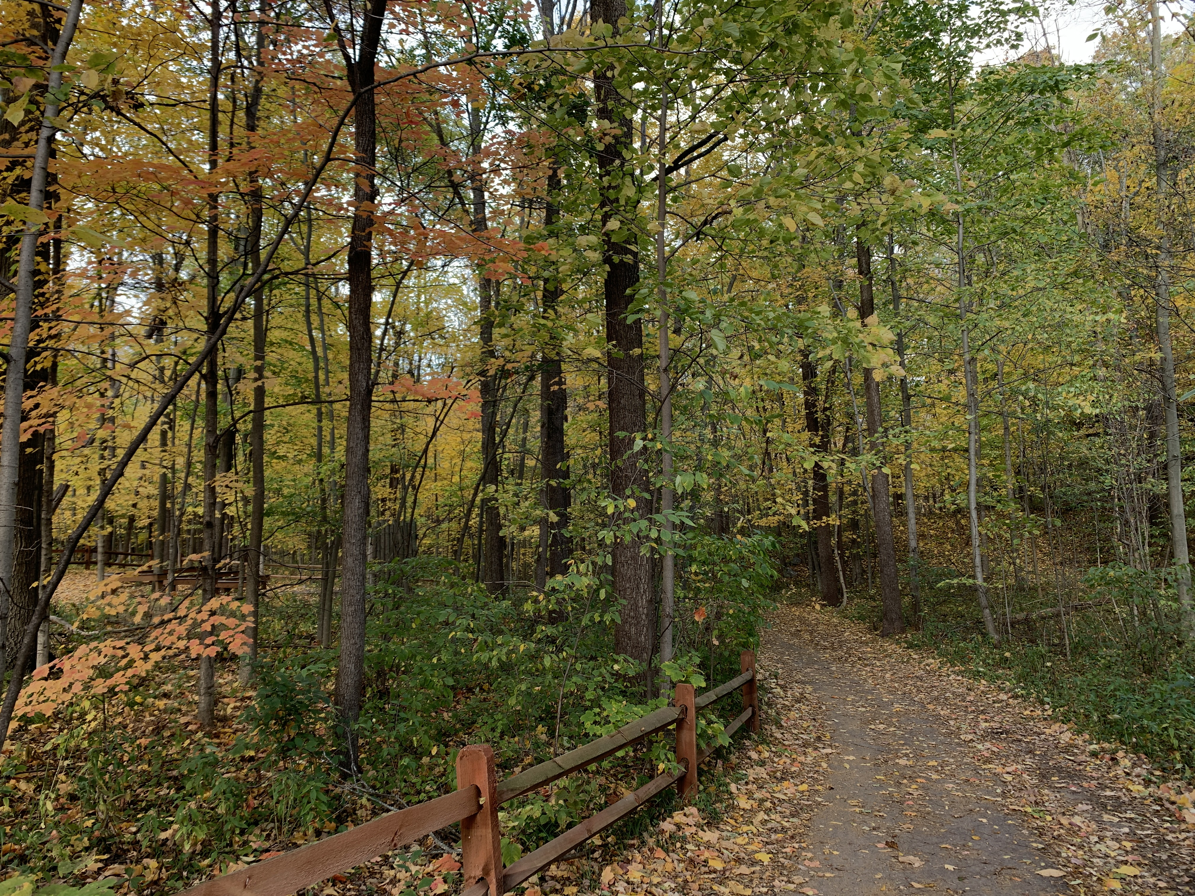 Meridian Township Adopts Plan to Encourage Green Infrastructure