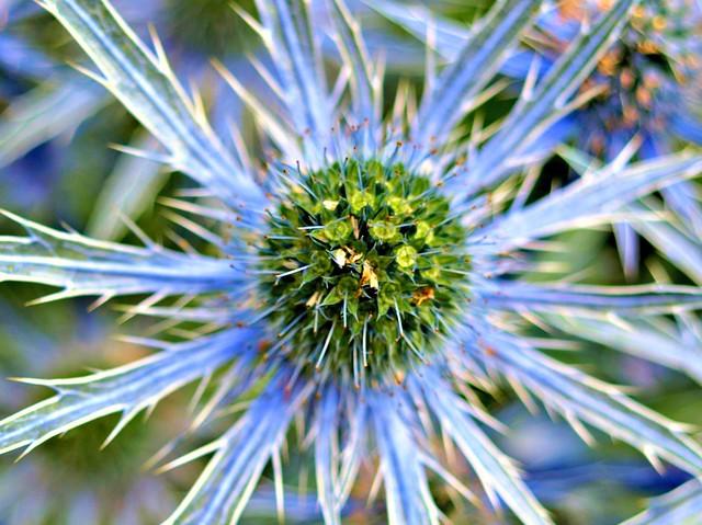 Spiky Summer Flower