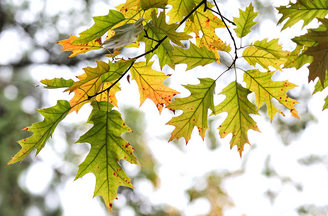 Subtle Autumn Findings