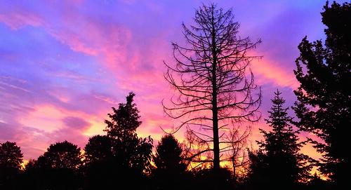 deutschland germany bergischgladbach himmel sky wolken clouds bäume trees silouhetten silouhettes sonnenaugang sunrise appleiphone6plus schreibtnix