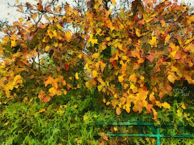Осень / Automne / Autumn