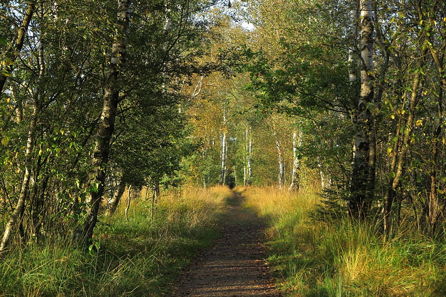 that path in autumn