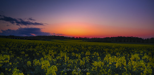 sunset nikond200 monksherborne hampshire landscape countryside eveningglow rapeseed fields