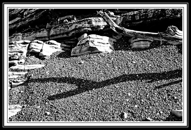 Driftwood and Shadow.