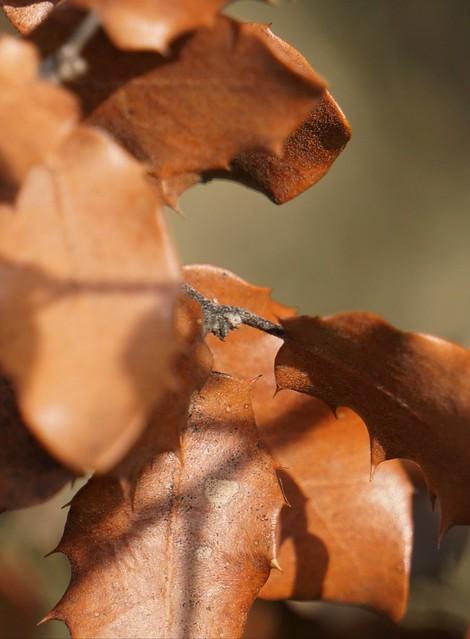 Hojas!!!                                                                                                                                                                                                                         Leaves!!!