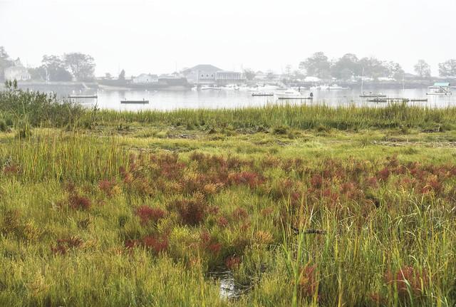 Colorful Marsh