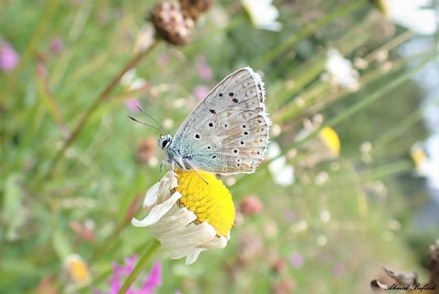 Butterfly 2091