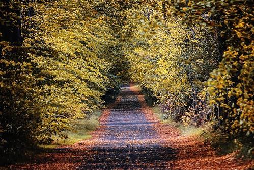dempsey 2c hugh avenue autumn empty 2cimage 2cireland ireland best road kildare flickr 72dpipreview trees landscape
