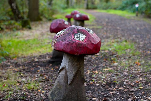 Yet another mushroom photo
