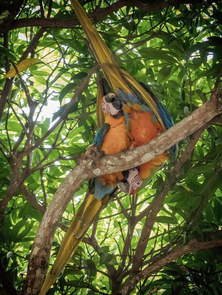 Parrot 69... 50513107188_e21639eaaa_b