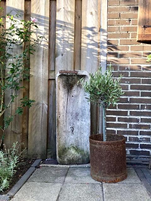 Oude houten bak pot roest met olijfboom