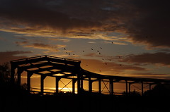 The old engine shed with birds by greenoid