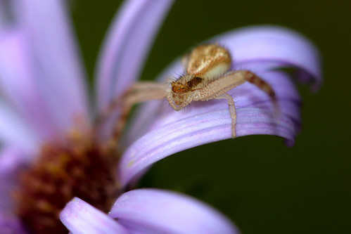 The Perching Crab | by curious_spider