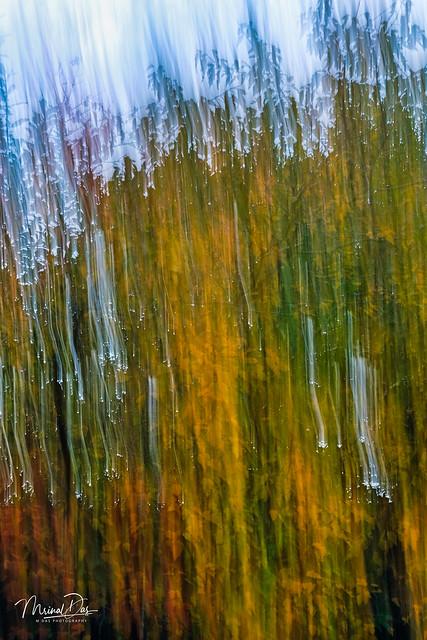 Nature's colour pallette
