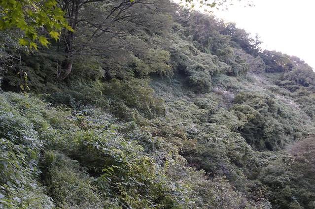 医王山田島園地から夫婦岩へ