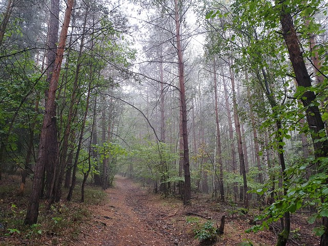 nature_forest_in_the_rain_002