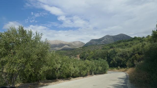 Roadside Olive Trees