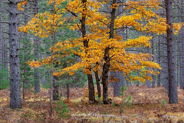 Highway 13 Forest