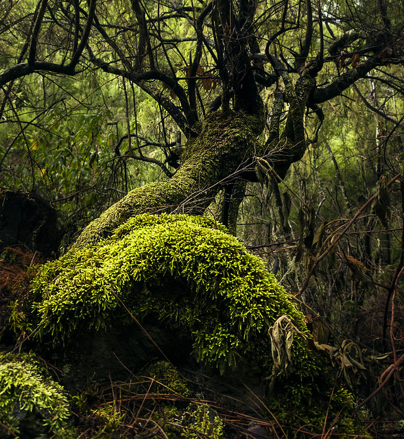 Verde que te quiero verde.....