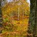 "<p><a href=""https://www.flickr.com/people/58036401@N05/"">Al-W</a> posted a photo:</p>  <p><a href=""https://www.flickr.com/photos/58036401@N05/50513734891/"" title=""Holme fell trees 1""><img src=""https://live.staticflickr.com/65535/50513734891_a32664b4c4_m.jpg"" width=""160"" height=""240"" alt=""Holme fell trees 1"" /></a></p>"
