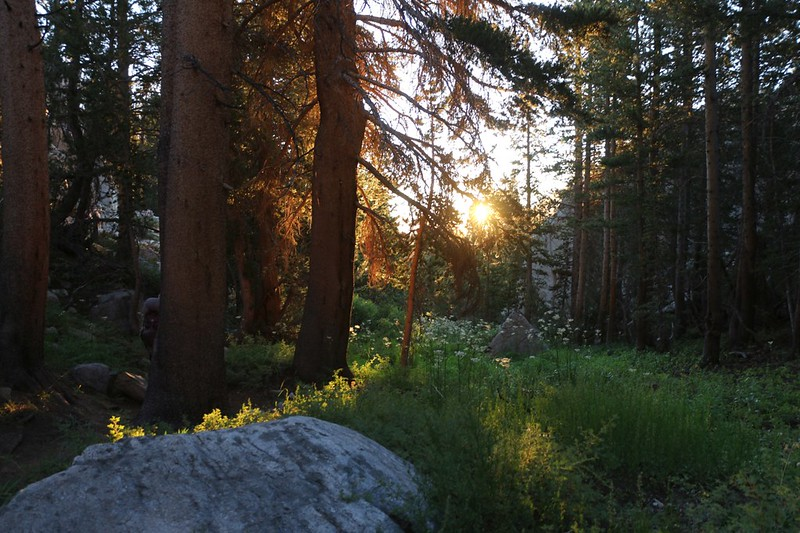 Morning Light through the trees and flowers and ferns on the NF Big Pine Creek Trail
