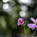 clkdoglover posted a photo:Helios-44M-4 Lens