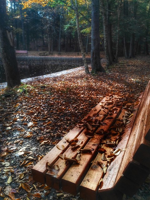A Bench for Fall