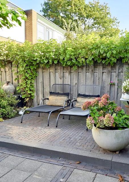 Ligstoelen landelijke tuin klimop schutting