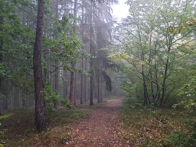 nature_forest_in_the_rain_004