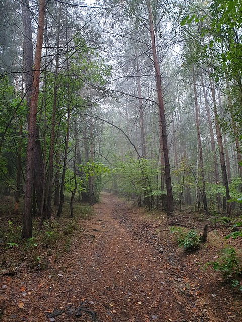 nature_forest_in_the_rain_001
