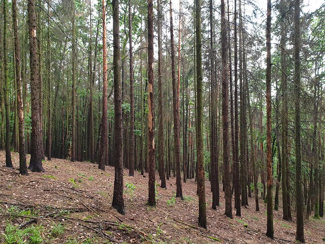 nature_sick_forest_01