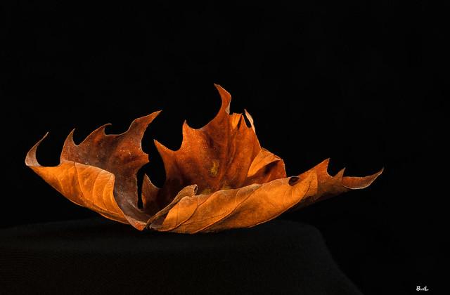 In Explore: Leaf