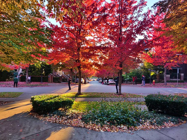 Ah fall...when the trees leaves change to bright and colors...in order to attract nature photographers and social media influencers. 😆📷