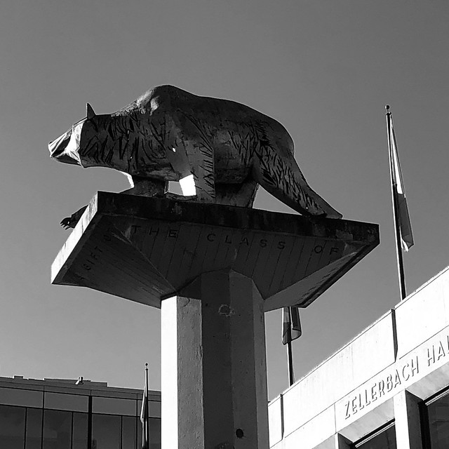 The Cal Bear in Monochrome