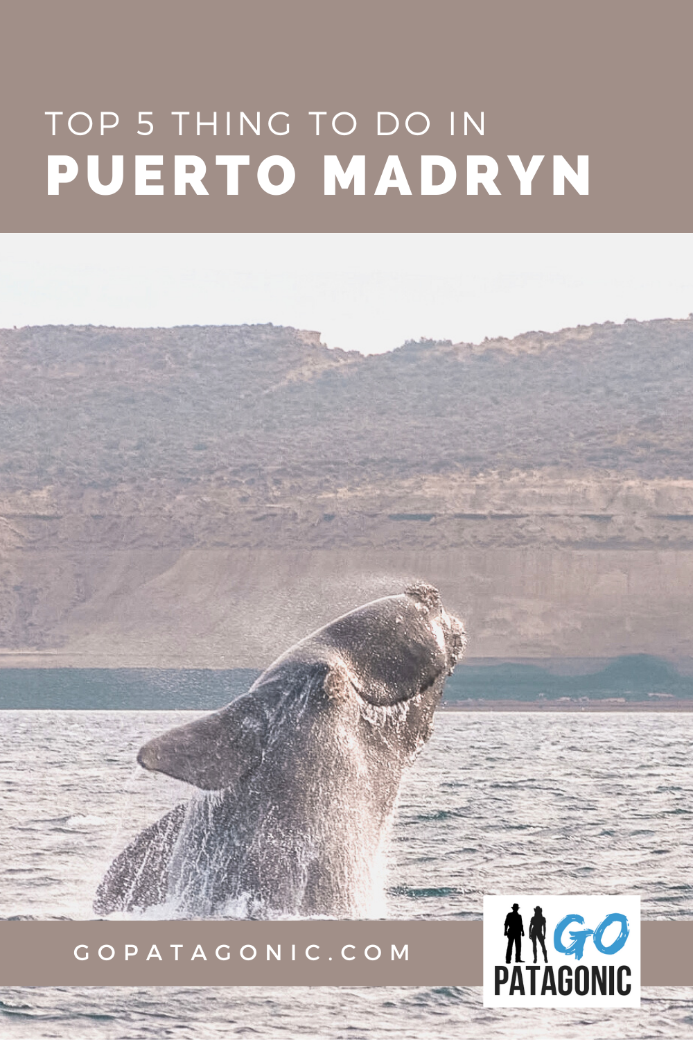 Things to do in Puerto Madryn top 5