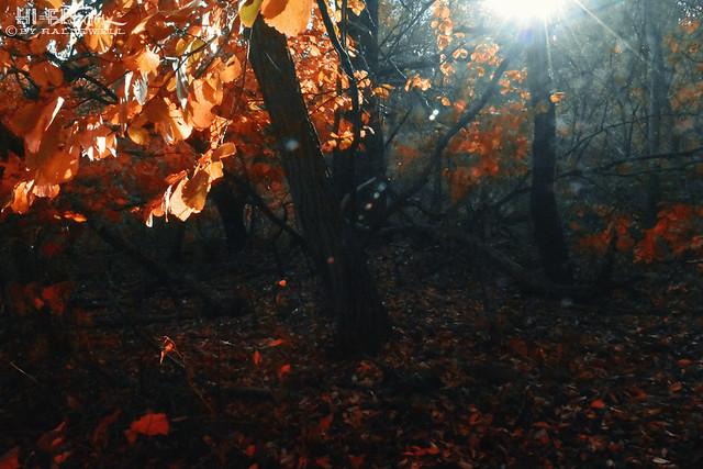Spooky October Woods