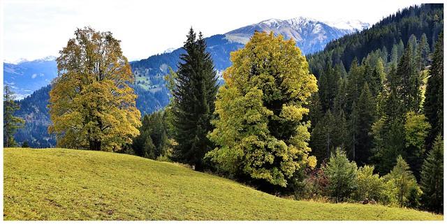 Fideriser Heuberge / Prättigau (Graubünden)